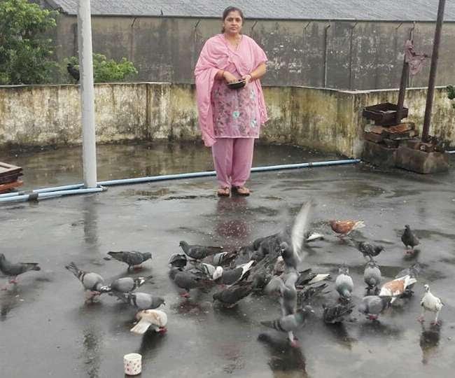छत पर पक्षी के लिए चित्र परिणाम