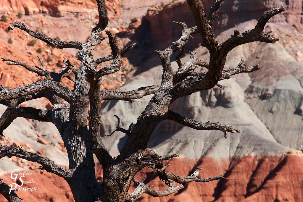 capitol reef photogenic tree