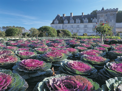 сад ornemental овощами Kitchen Gardens,'Potagers, Villandry,garden, castle, vegetable, potager, tuingarden, chateau,legumes