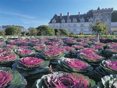 сад ornemental овощами Kitchen Gardens,'Potagers, Villandry,garden, castle, vegetable, potager, tuingarden, chateau,legumes