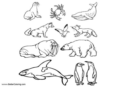 arctic tundra animals coloring pages  printable