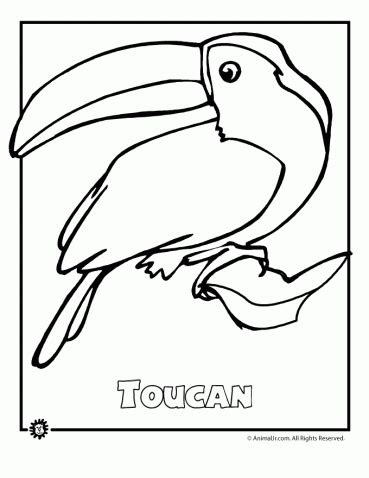endangered animals coloring pages animals  north