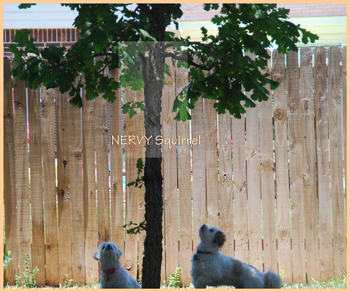 Nervy-Squirrel