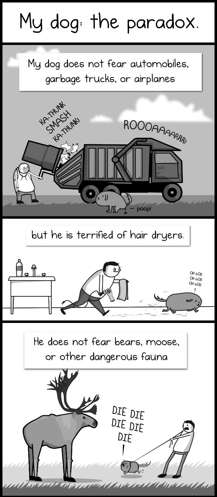 My dog: the paradox