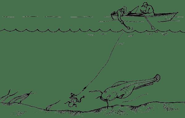 Ловля сома на квок