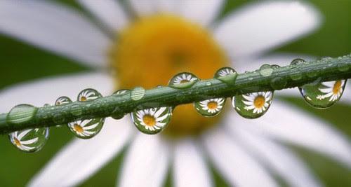FELIZ QUINTA FLOWER MEUS AMIGOS!!! by Menina Prendada -