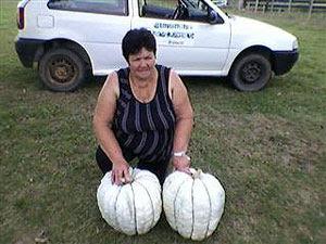 Agricultora colhe abóboras gigantes no interior do RS (Foto: Divulgação/Emater-RS)