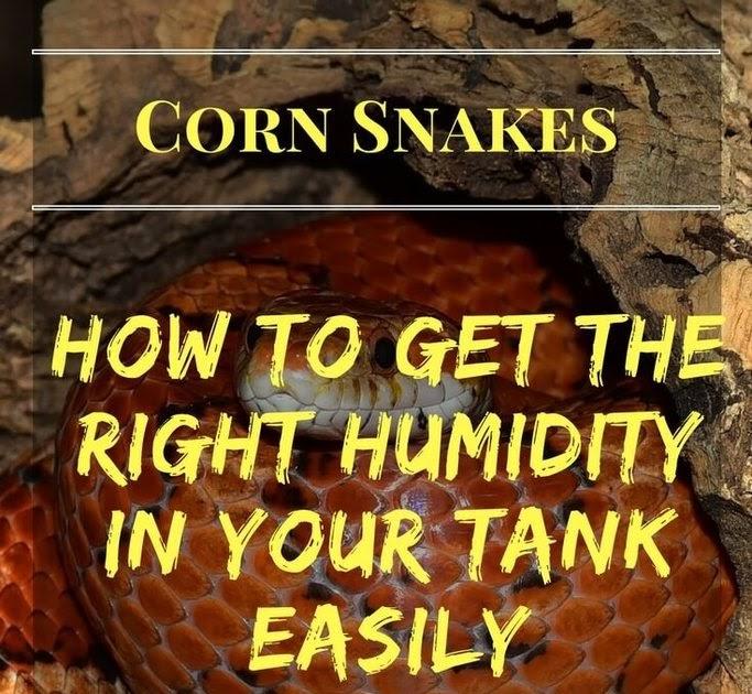 Bearded Dragon Tank: Corn Snake: Humidity