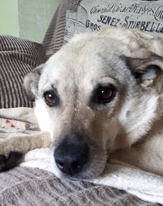 Donna – 6 year old female Cross-Breed