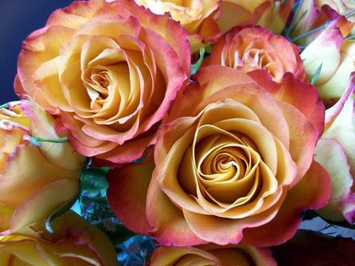 ValentineRoses_21711c