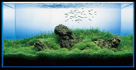 まるで鏡花水月!水槽の中を泳ぐ魚達や気泡に感動する