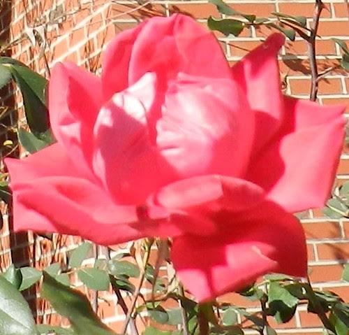 today flowers DSCN5538