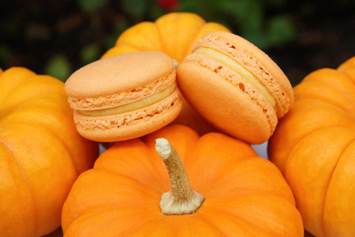 Pumpkin Pie French Macaron - Halloween, Thanksgiving Cookies Macarons