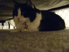 Josie under the guest bed