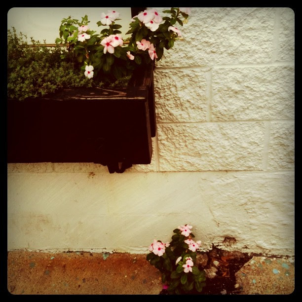 Instagram - window box