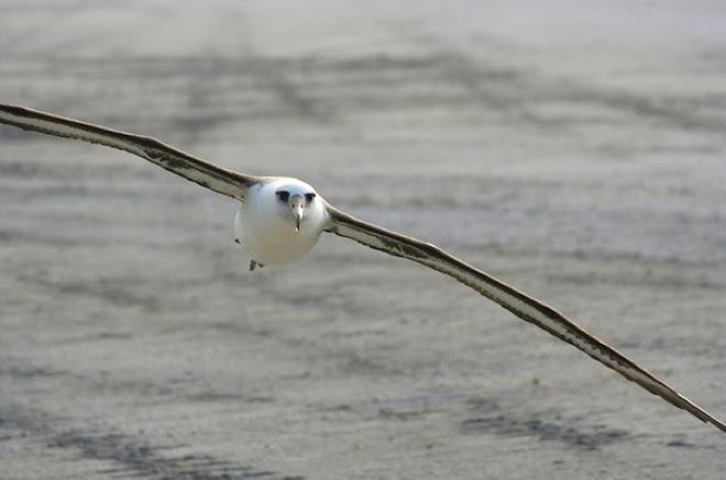 Long Distance Flier