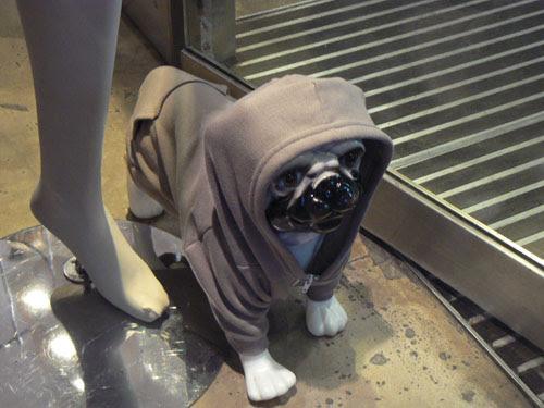 chien american apparel.jpg