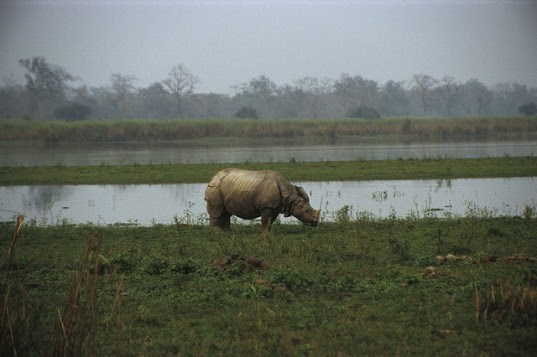 Jadav Payeng, Jadav Payeng forest, Jadav Payeng nature reserve, Jadav Payeng assam, Jadav Payeng ecosystem, Jadav Payeng local hero, Jadav Payeng times of india, india desertification, india deforestation, india payeng