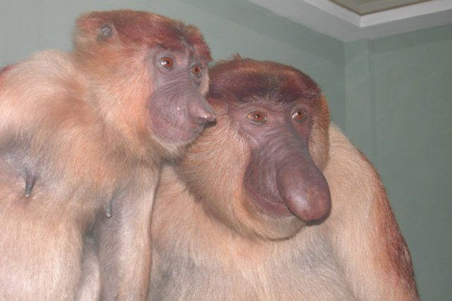Funny Ugly Monkey Pictures