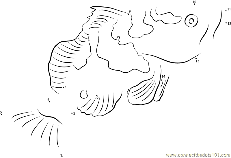 Grouper Fish - Free Colouring Pages