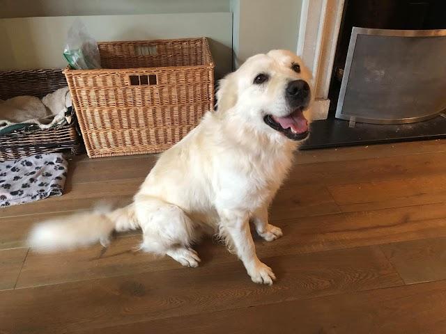Rollo – 5 year old male Cross-Breed