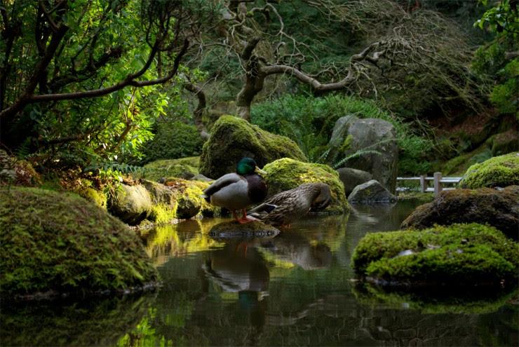 Portland-Photo by Tony Herrig