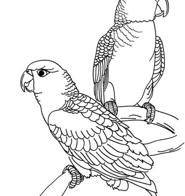 ausmalbilder zum ausdrucken vogel