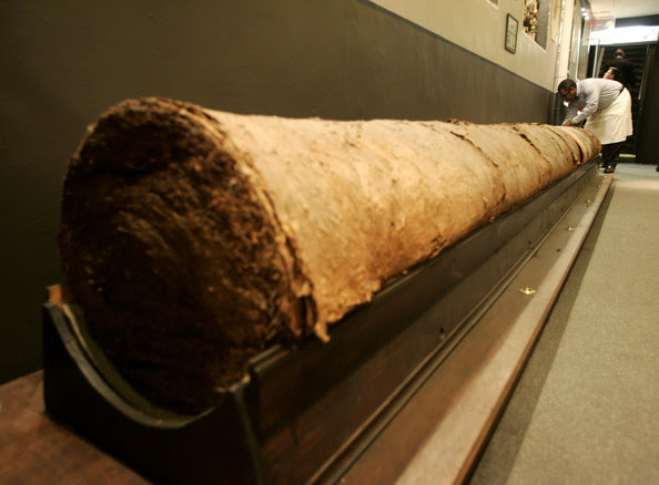 Saul of the Cubacigar Company Repairs The Largest Cigar IN The World