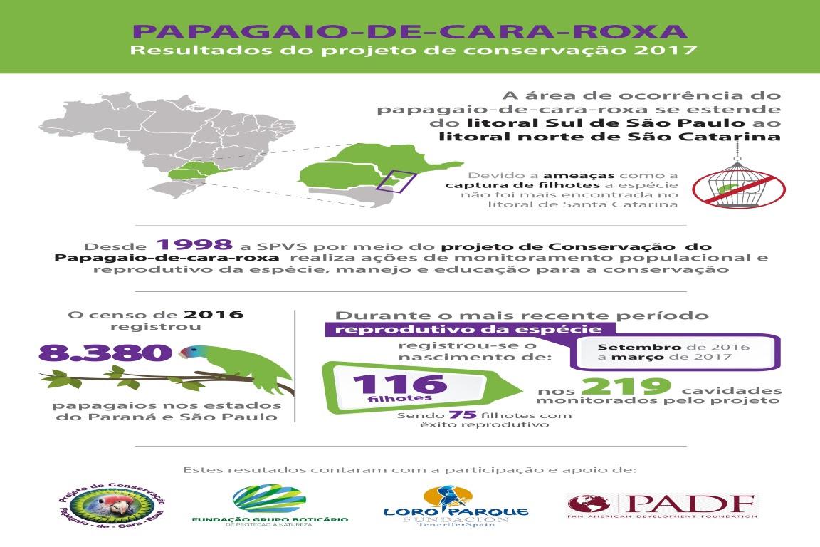infografico-papagaio-rev-02-01