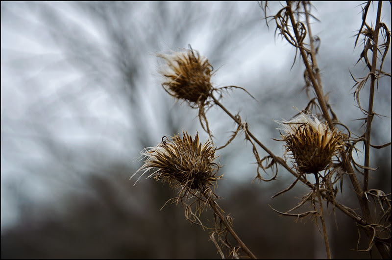 Weeds and Bokeh