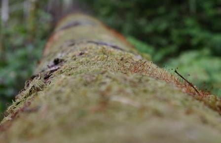 pathway_april