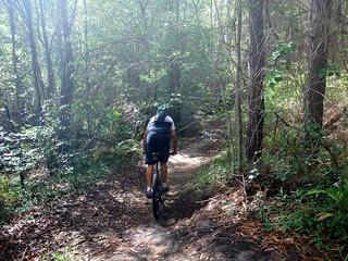 Glasshouse Single Trails