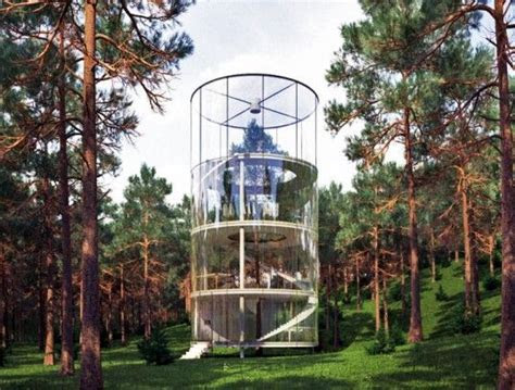 gigantic tree lives   gorgeous glass house