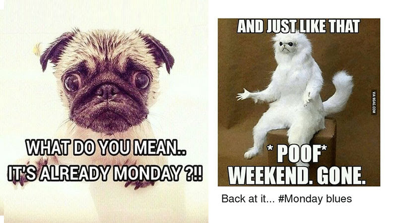 These Painfully Funny Monday Memes Are So Accurate That It Hurts A