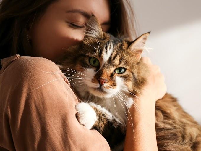 ¿Los gatos echan de menos a sus dueños?