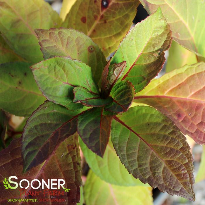 http://www.soonerplantfarm.com/_ccLib/image/plants/DETA-154.jpg