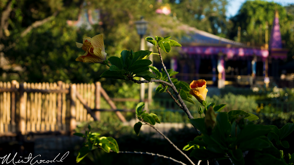 Disneyland Resort, Disneyland, Flower