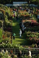 Rose Garden from the Overlook