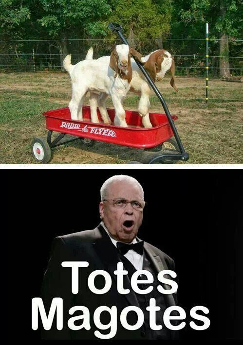 Totes Magotes - Funny every time!