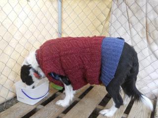 Our Dog Nessa's Winter Coat