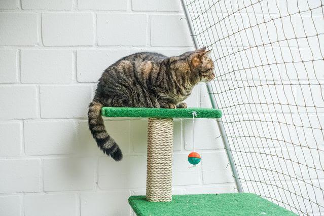 cat-on-cat-tree-3-1617345-639x426