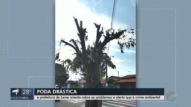 Secretaria de Meio Ambiente orienta sobre problemas devido a poda drástica em Leme