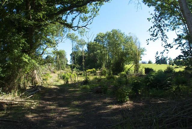 DSC_8135 coppice woodland