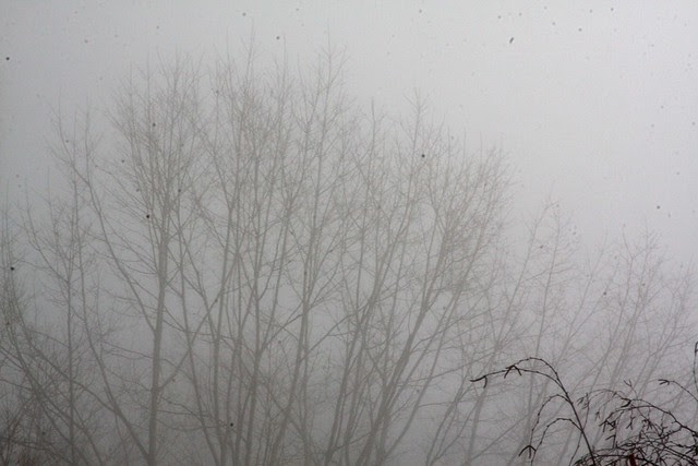 winter fog, december '09