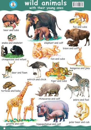 wild animals name with picture pdf