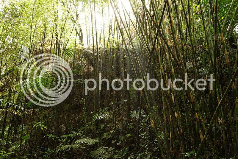 Puerto Rico, River, Contax G2, 35mm, film, photography, mountains, tropical, ocean, palm trees, bamboo, Kain Mellowship photo 04Bamboo_zpsrdgjgix4.jpg