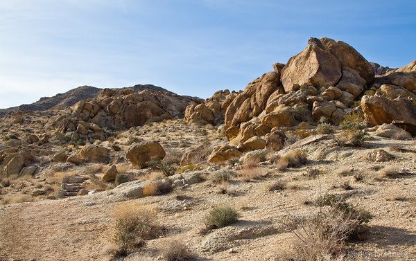 Joshua Tree National Park, on the Fortynine Palms Oasis trail