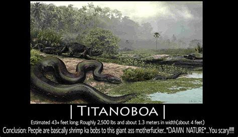 Titanoboa vs Megalodon   Titanoboa vs Megalodon ?   UFC Fight Club Forum   funny   Pinterest