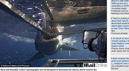 O tubarão saiu da briga com fome