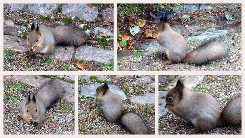 Oravat-kollaasi